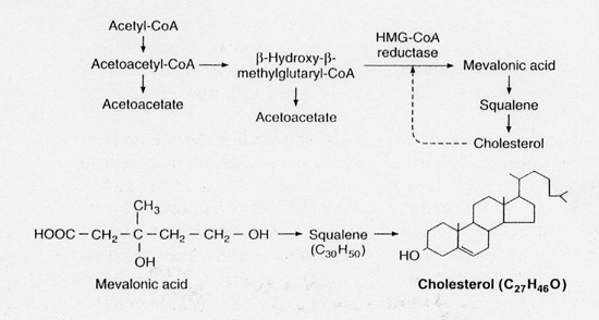 pathway of cholesterol synthesis