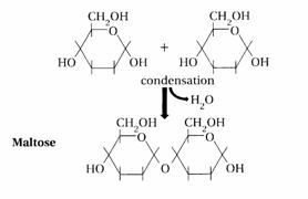 Diagram showing how two monosaccharides bond through a condensation reaction